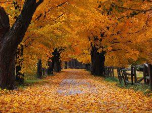 herfst-blog